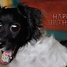 Crazy Dog Birthday Wishes by Myillusions