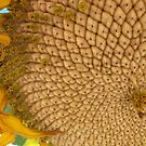 Sunflower by Kazzii