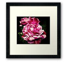 Rachel Louise Moran Roses Framed Print