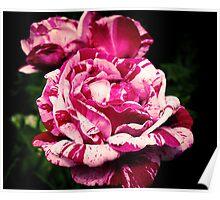 Rachel Louise Moran Roses Poster
