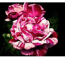 Rachel Louise Moran Roses Photographic Print