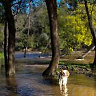 Happiness is a wet dog on a sunny Winter's day. by Melanie Travis