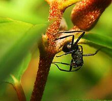 Tiny But Ferocious by Jennifer Lam