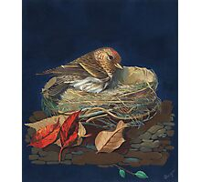 Sparrow in a nest Photographic Print