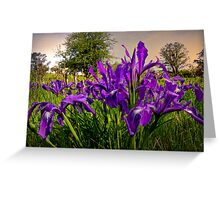Wild Iris and Light Greeting Card