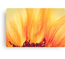 Sunflower II Canvas Print