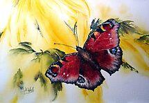 Butterfly- by Bev  Wells