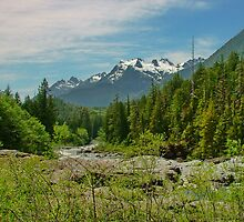 Mount Washington, Vancouver Island BC, Canada by AnnDixon