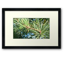 Pine or something, right? Framed Print