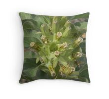 Drought-Resistant Milkweed Throw Pillow