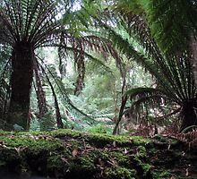 Tropical Rain Forest, Tasmania by RevJoc