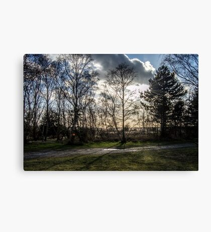 Sparse Tree Canvas Print