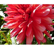 The Big Red Photographic Print