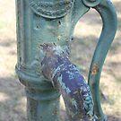 Apple water pump by Abigail Jennings