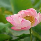 My love grows   by Brian Bo Mei