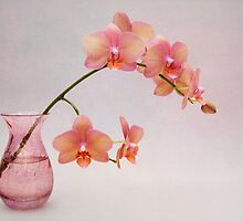 Orchids in a Pink Vase by Ann Garrett