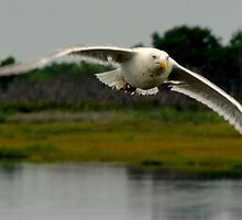 Fast in Flight by Chuck Chisler