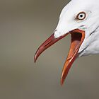 Seagull Squawking  by Paul Pegler