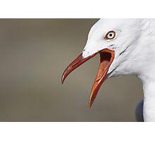 Seagull Squawking  Photographic Print