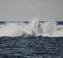 A Whale of a Splash ~ Outer Great Barrier Reef by melodyart