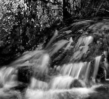 Rock and Lichen by Jeffrey  Sinnock