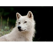 A Wolfie for Dorothy! Photographic Print