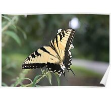 Gentle Tiger 3 Poster