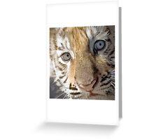 Baby Bengal Greeting Card