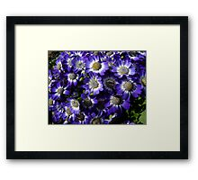 Purple Patch - Groundcover Framed Print