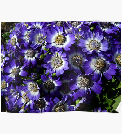 Purple Patch - Groundcover Poster