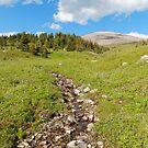 Green Sunshine Meadows by zumi