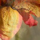 Dried Rose by Lozzar Flowers & Art
