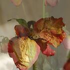 Dried Roses Collage by Lozzar Flowers & Art