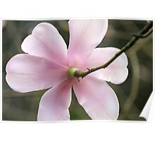 Dainty Pink Poster