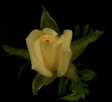 Miniature Yellow Rose by Corri Gryting Gutzman