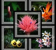 Garden selection by myraj