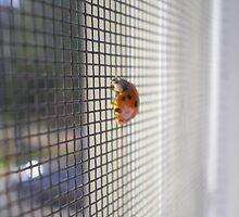 Ladybug by Oil Water Artt