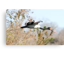 Saddle-billed Stork Canvas Print