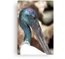 Black-necked Stork Canvas Print