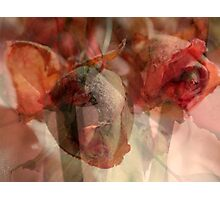 Dried Roses with Wonder Photographic Print