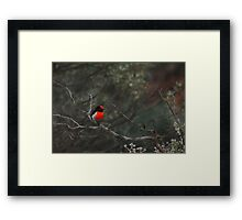 Red-capped Robin - Male Framed Print