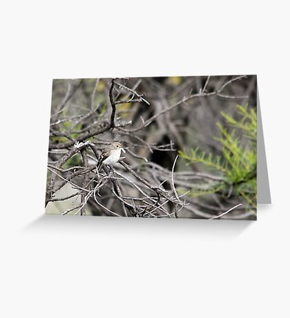 Red-capped Robin - Female Greeting Card