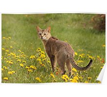 Unbelievable Chausie Poster