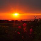 Sunrise through the roses by Jackie  Smith