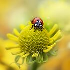 Sun lady by Mandy Disher