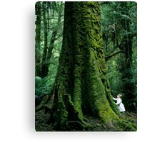 Mountain Ash (Eucalyptus regnans)  Canvas Print
