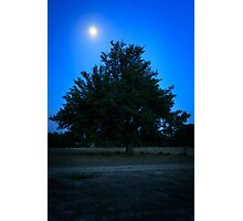 Lone Live Oak Early Evening Photographic Print