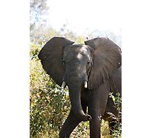 Knees up - Lower Zambezi National Park Photographic Print