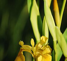 gold in the green by MikeTheYokel