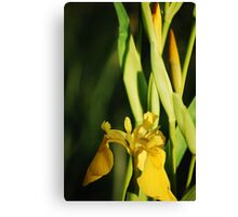 gold in the green Canvas Print